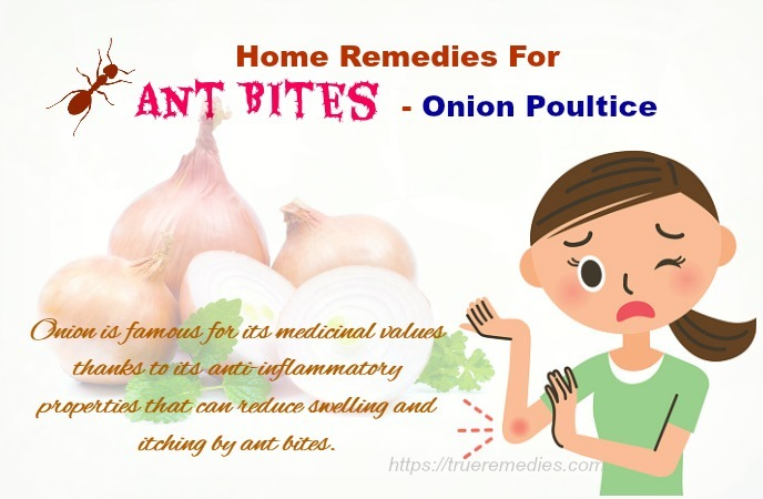 home remedies for ant bites - onion poultice