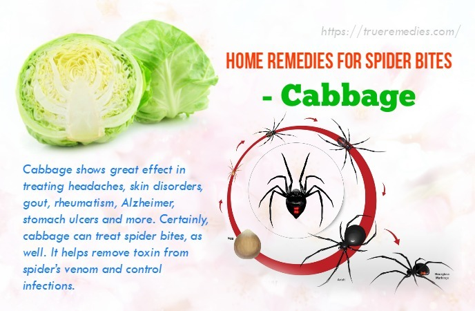 home remedies for spider bites - cabbage