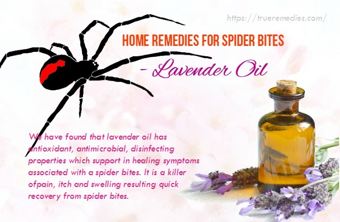home remedies for spider bites - lavender oil