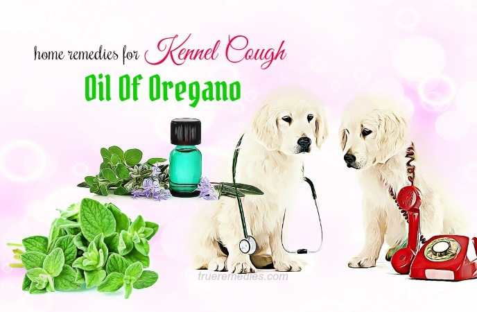 home remedies for kennel cough - oil of oregano