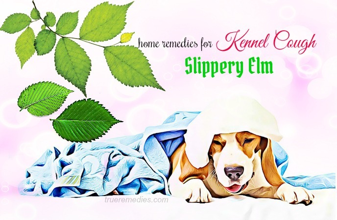 home remedies for kennel cough - slippery elm