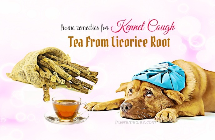 home remedies for kennel cough - tea from licorice root