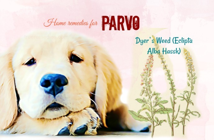 10 Natural Home Remedies For Parvo In A Dog