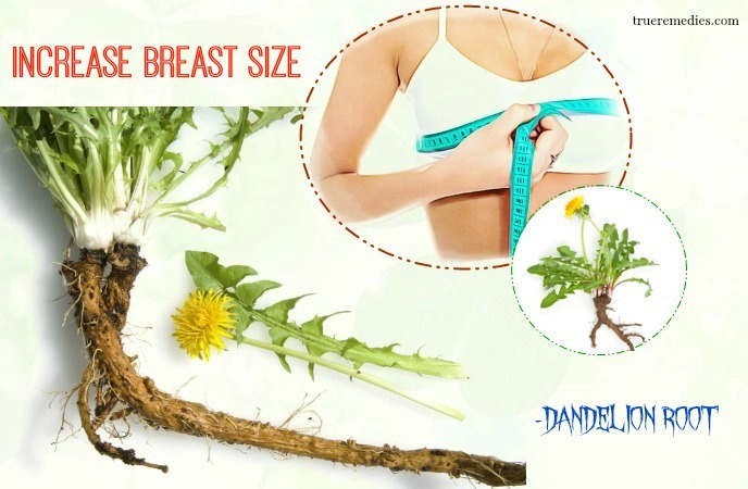 home remedies to increase breast size - dandelion root