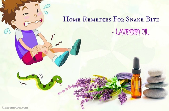 home remedies for snake bite - lavender oil