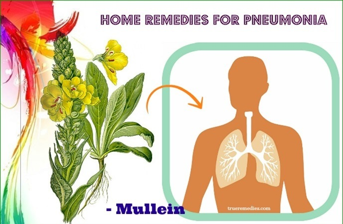 home remedies for pneumonia - mullein