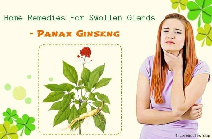 home remedies for swollen glands - panax ginseng