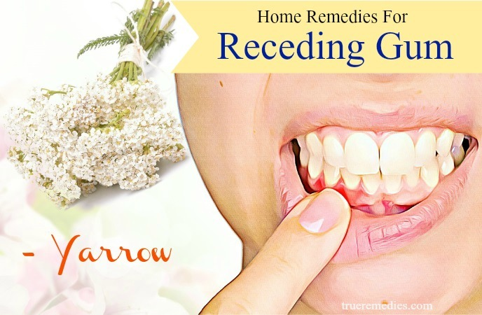 natural home remedies for receding gum - yarrow