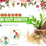 organic valerian root benefits