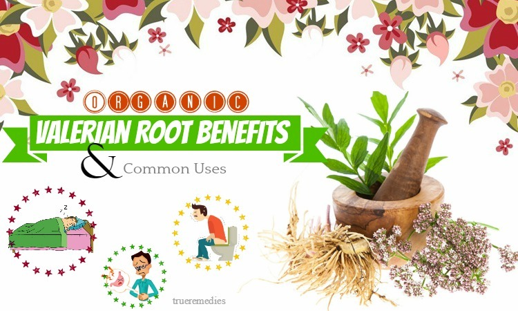 organic valerian root benefits