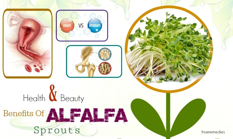 beauty benefits of alfalfa sprouts