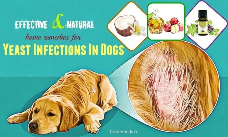 effective home remedies for yeast infections in dogs
