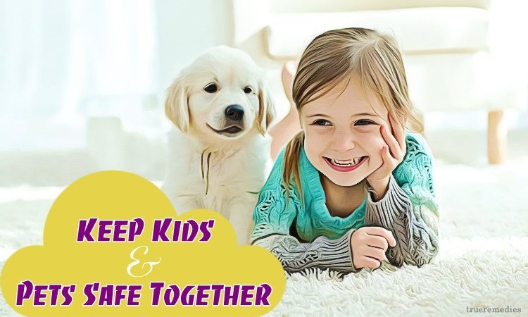 top ways on how to keep kids & pets safe together