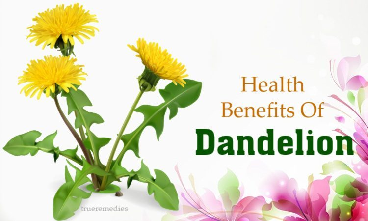 beauty and health benefits of dandelion