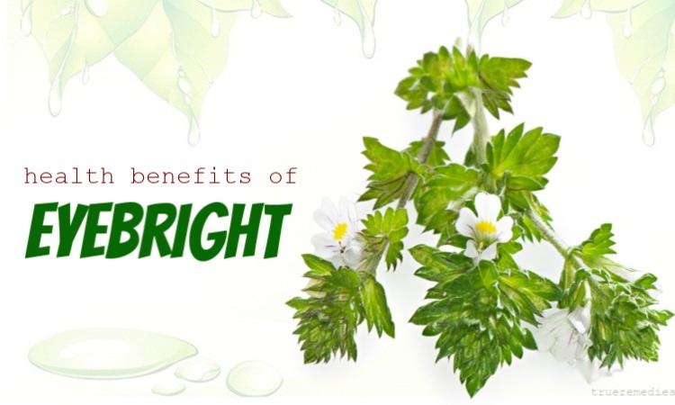 health benefits of eyebright herb